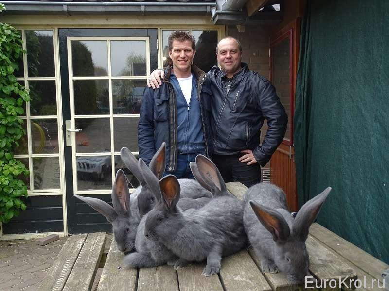 В гостях у кроликовода