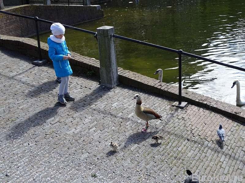 Девочка кормит гусей