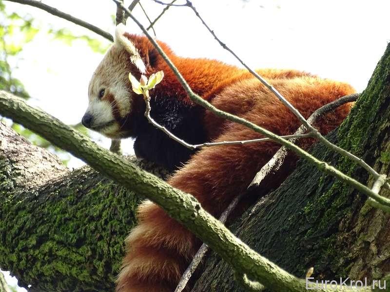 Зоопарк Бляйлорп в Роттердаме