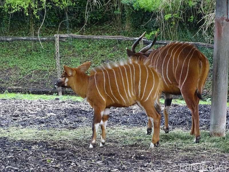 Зоопарк Голандия