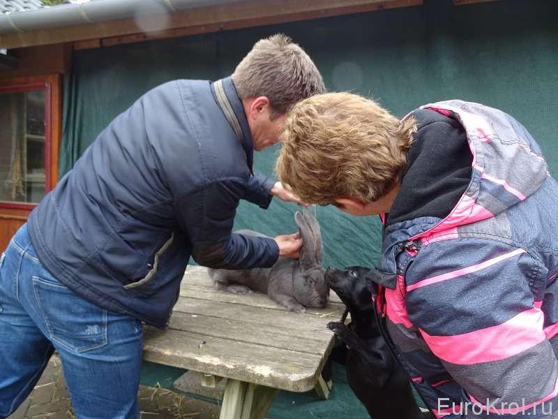 Измеряем фландру уши
