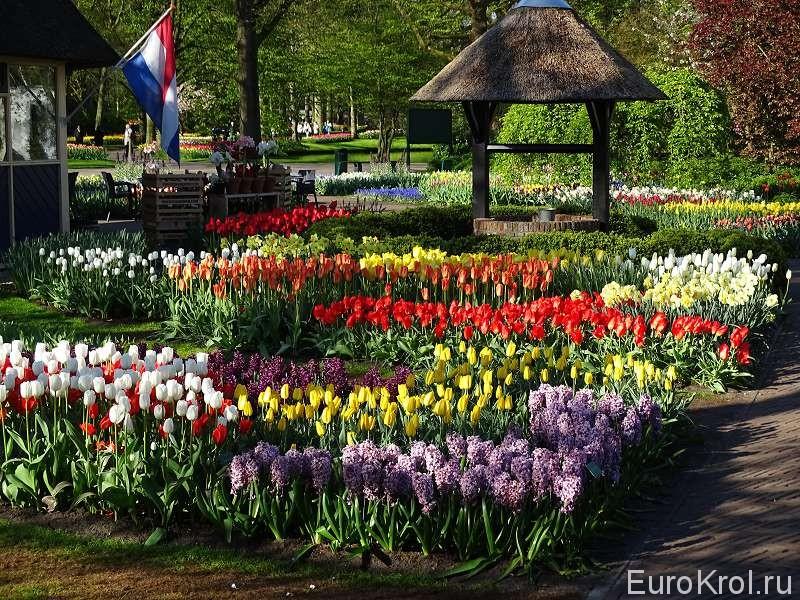 Миллионы цветов в парке Кёкенхоф