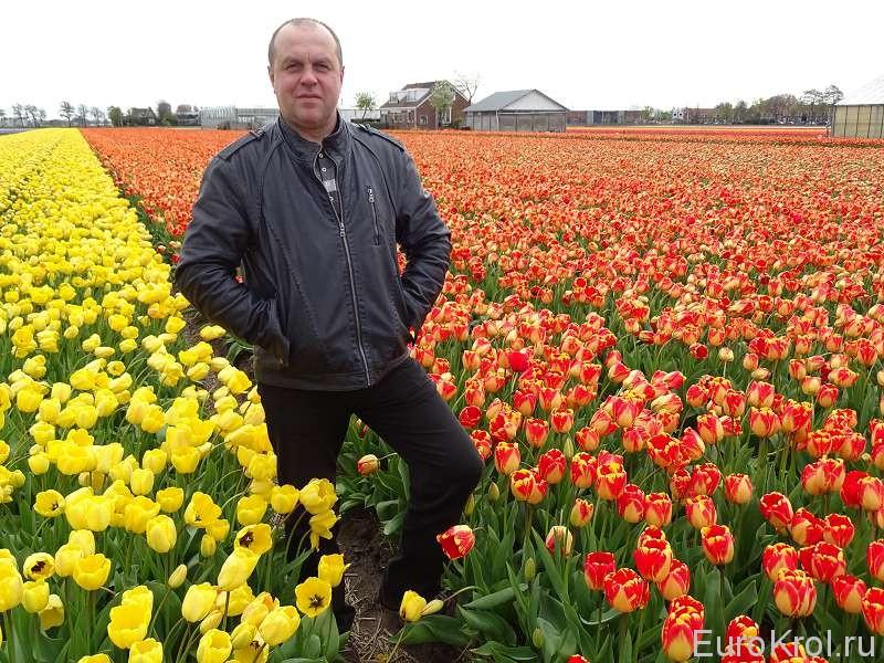 Поля тюльпанов Голландия