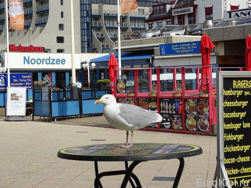 Схевенинген (Scheveningen) чайка на пляже