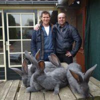 С Гервином в Голландии