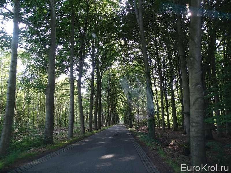 Дорога под деревьями