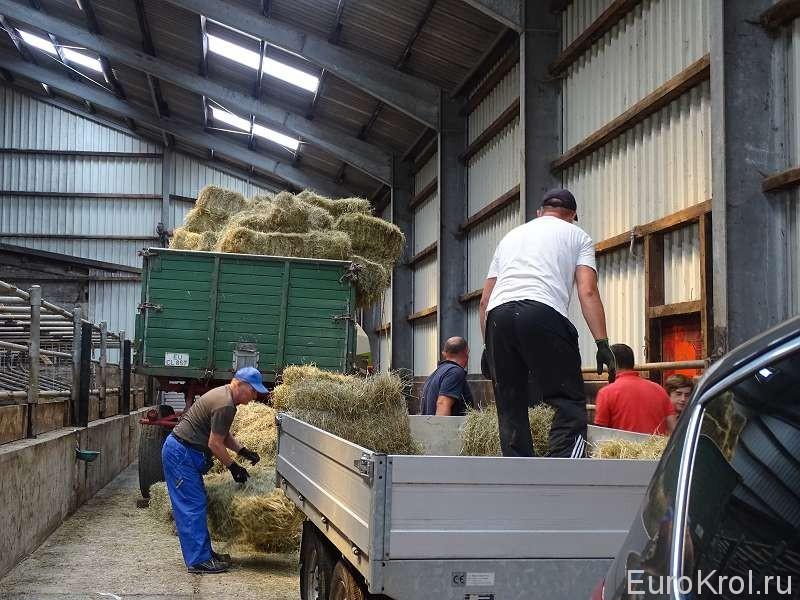 Заготовка сена в тюках