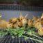 Кормление кроликов крапивой
