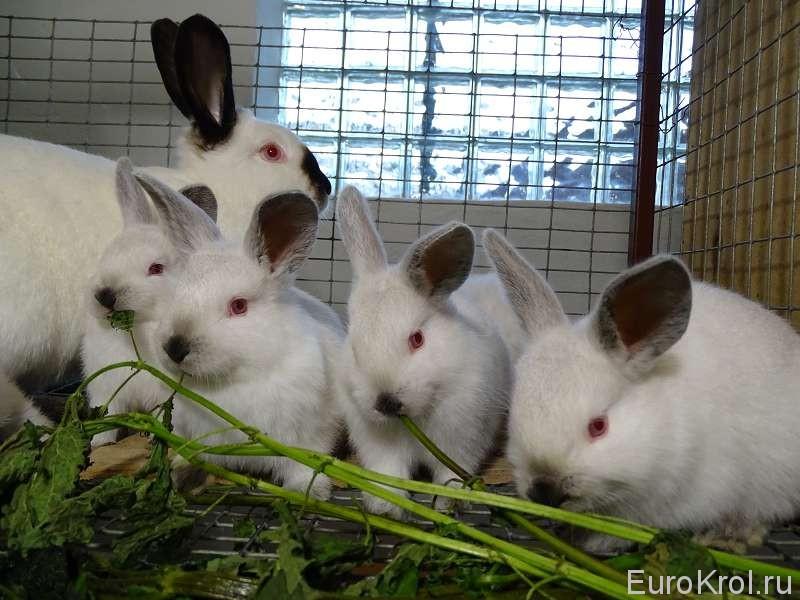 Крапива и кролики