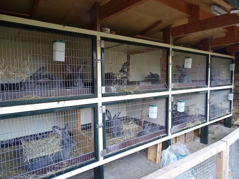 Кролиководческое хозяйство
