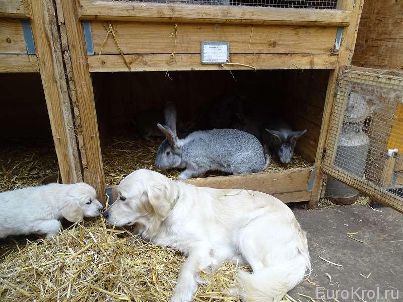 Собаки и кролики