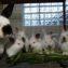 Кролики и крапива