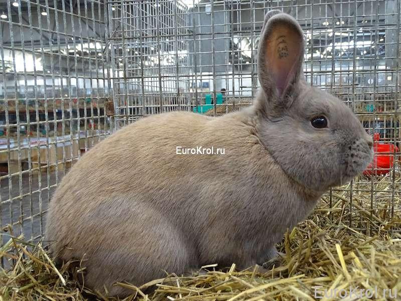 Кролик порода сепаратор - Separator (Sep)