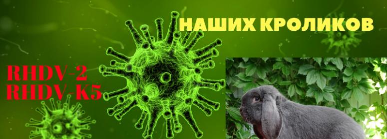 Мутирующий вирус убийца кроликов