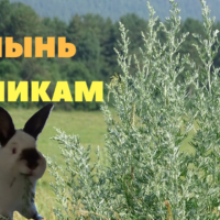 Полынь кроликам