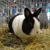 Кролики в Чехии