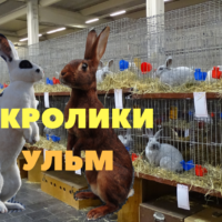 Кролики выставка Ульм