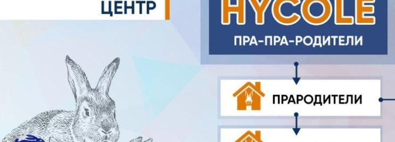 Промышленные гибриды Хиплюс Хиколе