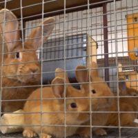 Кролики мифы и реальность